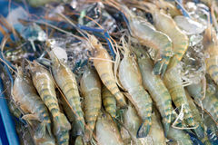 Raw shrimps Royalty Free Stock Photo