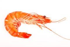 Free Raw Shrimps On White Stock Photos - 31761983