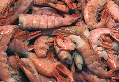 Raw shrimps pile Stock Images