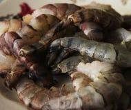 Raw Shrimps Stock Photos