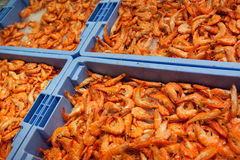 Raw shrimps on trays Stock Photo