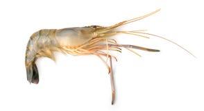 Raw shrimps  on white background Royalty Free Stock Image