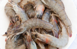 Raw shrimps on white plate Royalty Free Stock Images