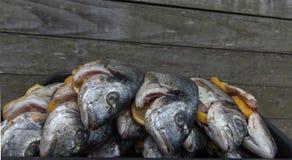 Raw silver sea bream fish. Plate with raw silver sea bream fish Stock Image