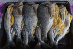 Raw silver sea bream fish. Plate with raw silver sea bream fish Stock Images