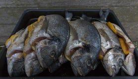 Raw silver sea bream fish. Plate with raw silver sea bream fish Stock Photography