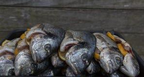 Raw silver sea bream fish. Plate with raw silver sea bream fish Royalty Free Stock Photo