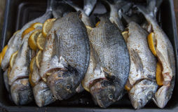 Raw silver sea bream fish. Plate with raw silver sea bream fish Royalty Free Stock Photos