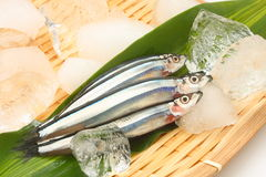 Raw small fish Royalty Free Stock Image