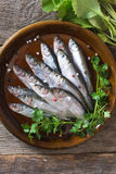 Raw small fishes Stock Image