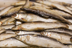 Raw smelt fish in the store Royalty Free Stock Image