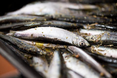 Raw Smelts Royalty Free Stock Photo