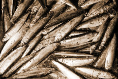 Raw Smelts Royalty Free Stock Images