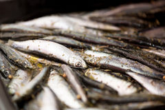 Raw Smelts Royalty Free Stock Photography