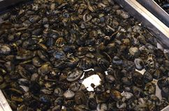 Raw snails in shell alive in the fish market stock image