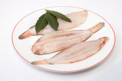 Raw sole fish with bay branch. Raw sole fish ready to cook. Plate of three pieces decorated with a bay leaves of rosemary. Isolated over white background Stock Photography