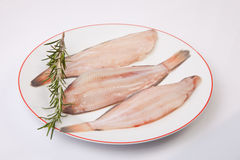 Raw sole fish with rosemary. Raw sole fish ready to cook. Plate of three pieces decorated with a branch of rosemary. Isolated over white background Royalty Free Stock Image