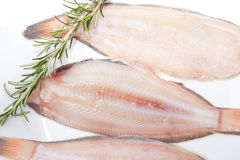Raw sole fish with rosemary. Raw sole fish ready to cook. Plate of three pieces decorated with a branch of rosemary. Isolated over white background Stock Photos