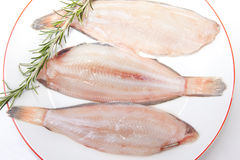 Raw sole fish with rosemary. Raw sole fish ready to cook. Plate of three pieces decorated with a branch of rosemary. Isolated over white background Stock Image