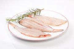 Raw sole fish with rosemary. Raw sole fish ready to cook. Plate of three pieces decorated with a branch of rosemary. Isolated over white background Royalty Free Stock Photography