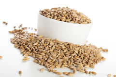 Raw Spelt Seeds Stock Photography