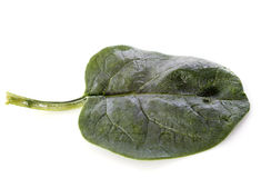 Raw spinach Royalty Free Stock Image