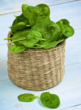 Raw Spinach Leafs Stock Photos