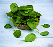 Raw Spinach Leafs Royalty Free Stock Images