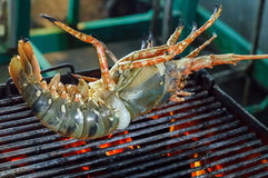 Raw spiny lobsters GRILLED SEAFOOD Royalty Free Stock Photography
