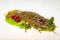 Raw spiny lobsters Royalty Free Stock Photos