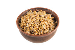 Raw sprouted wheat germ isolated on white background Royalty Free Stock Images
