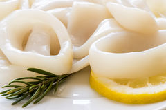 Raw squid rings Royalty Free Stock Image