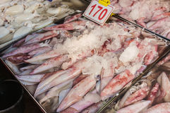 Raw Squid Royalty Free Stock Photography