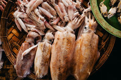 Raw squids at asian street market Stock Image
