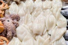 Raw Squids Stock Image