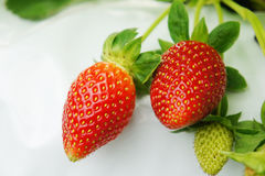 Raw strawberry Royalty Free Stock Photography