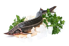 Raw sturgeon with greens Royalty Free Stock Photos