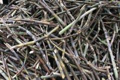 Raw Sugar Cane. Sugar cane awaiting refining, Venezuela Stock Images