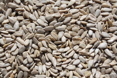 Raw Sunflower Kernels royalty free stock images