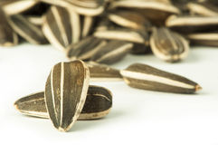 Raw sunflower seed Royalty Free Stock Photography