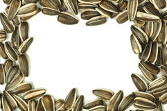 Raw sunflower seed Royalty Free Stock Photo