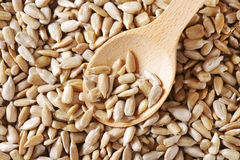 Raw sunflower seed Stock Images