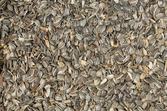 Dried Sunflower Seeds in Shells Royalty Free Stock Images