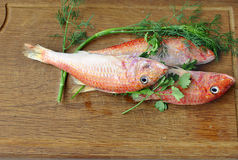 Raw surmullet with herbs Stock Photography