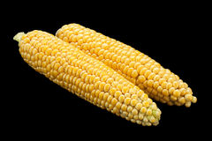 Raw sweet corn detail Stock Images