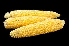 Raw sweet corn detail Royalty Free Stock Image