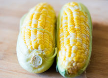 Raw sweet corn: realistic approach to food ingredients Royalty Free Stock Images