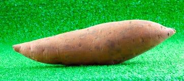 Raw sweet potato on artificial turf Stock Photo
