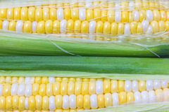 Raw Sweetcorn. Stock Images