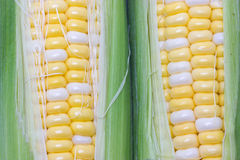 Raw Sweetcorn. Royalty Free Stock Photography